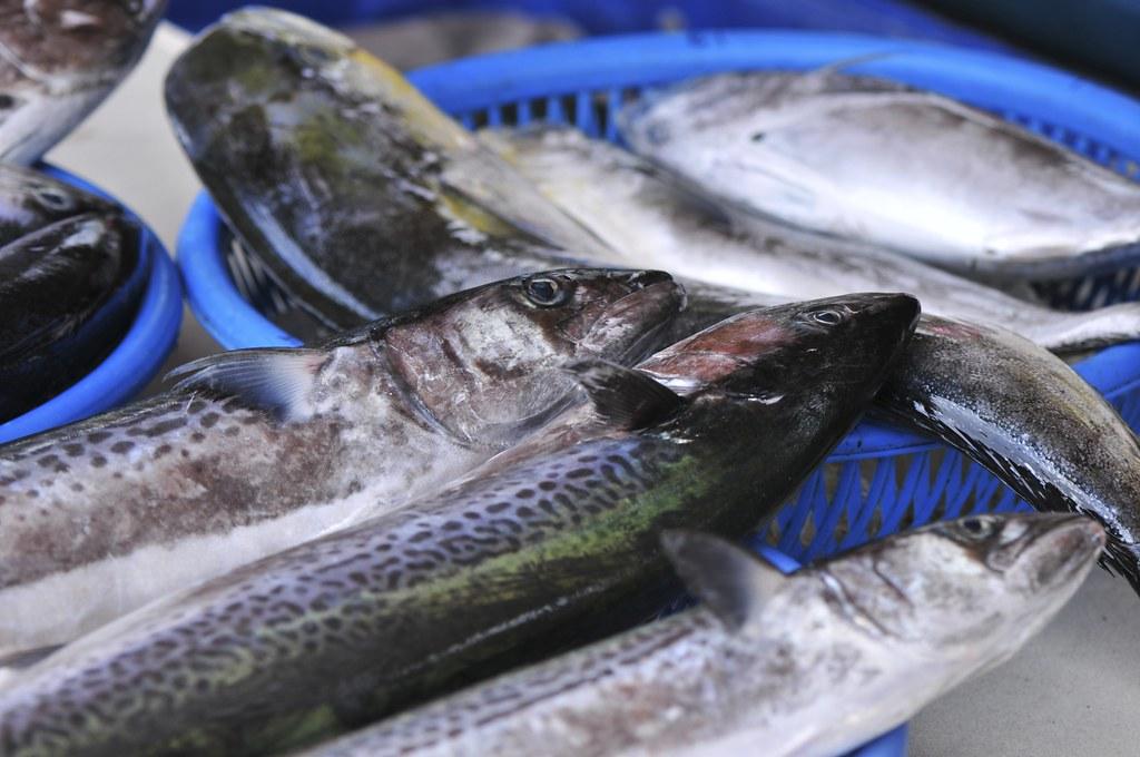 fishing port Daxi 65