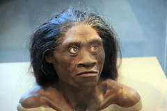 Homo floresiensis adult female - model of head...