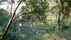 獅子ヶ谷市民の森(新池)(Shin-ike Pond, Shishigaya Community Woods)