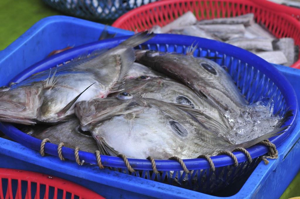 fishing port Daxi 69