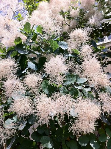 木の花(Flower of tree)