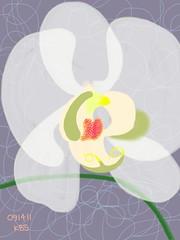 091411 W2 Orchid 16E