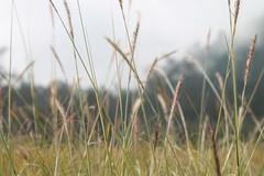 "Pendakian Sakuntala Gunung Argopuro Juni 2014 • <a style=""font-size:0.8em;"" href=""http://www.flickr.com/photos/24767572@N00/26555921544/"" target=""_blank"">View on Flickr</a>"