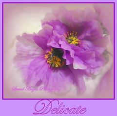 So Delicate--Happy Sunday