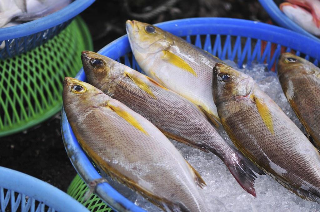 fishing port Daxi 46