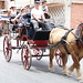 """2012-07-29-feria-almoradi-desfile-animales-tradicionales • <a style=""""font-size:0.8em;"""" href=""""http://www.flickr.com/photos/51501120@N05/7669716710/"""" target=""""_blank"""">View on Flickr</a>"""