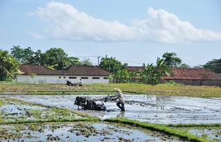 bali nord - indonesie 44