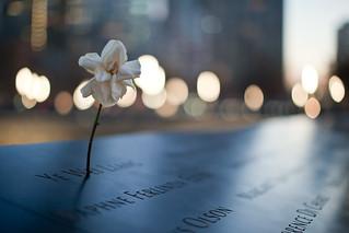 Flower at September 11 Memorial