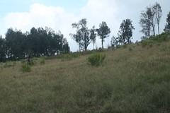 "Pendakian Sakuntala Gunung Argopuro Juni 2014 • <a style=""font-size:0.8em;"" href=""http://www.flickr.com/photos/24767572@N00/27161735815/"" target=""_blank"">View on Flickr</a>"