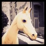 My old friend Sir Tobi, the horse