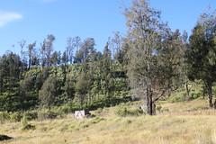 "Pendakian Sakuntala Gunung Argopuro Juni 2014 • <a style=""font-size:0.8em;"" href=""http://www.flickr.com/photos/24767572@N00/27066057932/"" target=""_blank"">View on Flickr</a>"