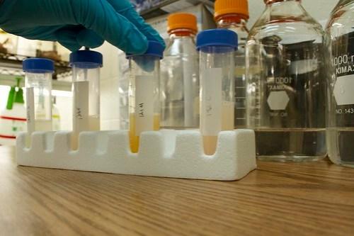 Probiotics stock solution