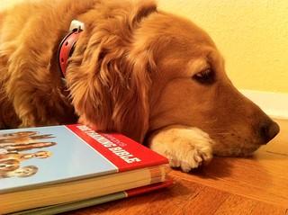 Golden Resting With Barron's Dog Training Bibl...