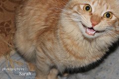 when cats say : MEOW !