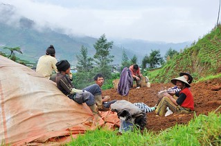 dieng plateau - java - indonesie 35