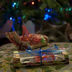 Dexter at Christmas