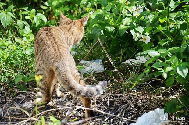 Cat漫步虎班03.jpg