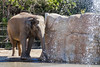 "Elephant takes a shower at San Diego Zoo 2011 • <a style=""font-size:0.8em;"" href=""http://www.flickr.com/photos/33121778@N02/6557417855/"" target=""_blank"">View on Flickr</a>"