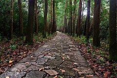 The Winding Path My Son Vietnam