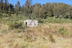 "Pendakian Sakuntala Gunung Argopuro Juni 2014 • <a style=""font-size:0.8em;"" href=""http://www.flickr.com/photos/24767572@N00/27161245665/"" target=""_blank"">View on Flickr</a>"
