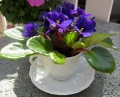 Teacup Violets  - Lisa Greene, AAF, AIFD, PFCI