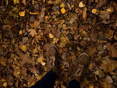 Walking Autumn