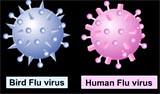 Goalfinder Part2-Human--bird-flu--viru