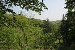 新治市民の森(見晴らし広場)(Niiharu Community Woods)