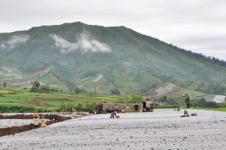 dieng plateau - java - indonesie 26