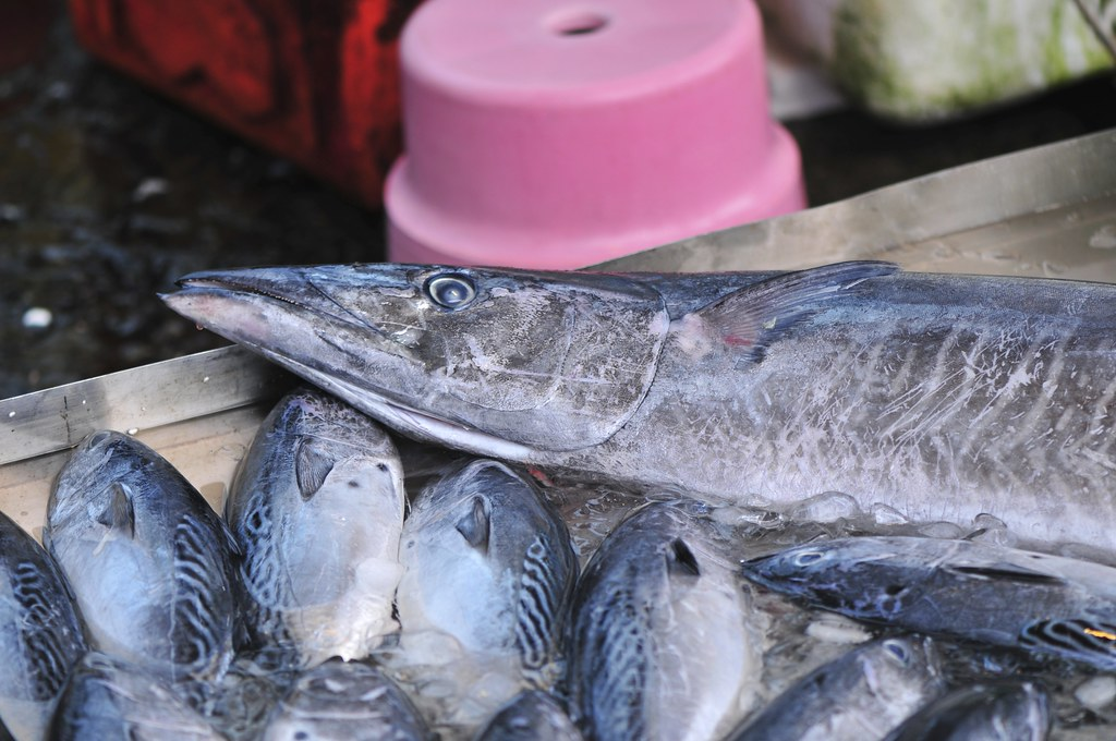 fishing port Daxi 51