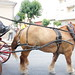 """2012-07-29-feria-almoradi-desfile-animales-tradicionales • <a style=""""font-size:0.8em;"""" href=""""http://www.flickr.com/photos/51501120@N05/7669718700/"""" target=""""_blank"""">View on Flickr</a>"""