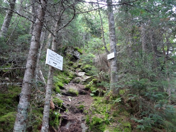The Link Junction on the Mt. Jefferson Castle Trail