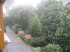 Intense summer rain