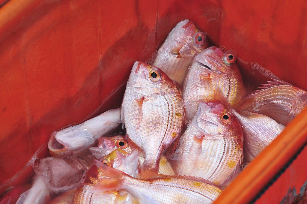 fishing port Daxi 33