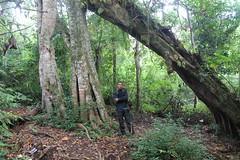 "Pendakian Sakuntala Gunung Argopuro Juni 2014 • <a style=""font-size:0.8em;"" href=""http://www.flickr.com/photos/24767572@N00/26557714473/"" target=""_blank"">View on Flickr</a>"