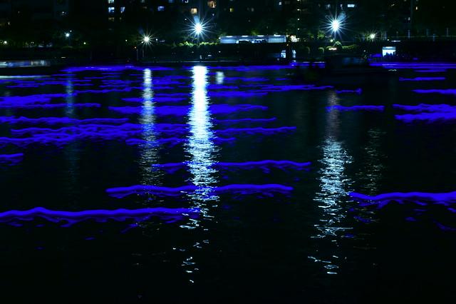Hotaru on Sumida River
