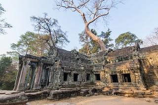 angkor - cambodge 2016 95