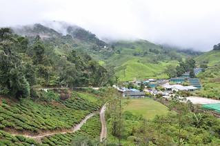 cameron highlands- malaisie 26