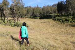 "Pendakian Sakuntala Gunung Argopuro Juni 2014 • <a style=""font-size:0.8em;"" href=""http://www.flickr.com/photos/24767572@N00/26555311514/"" target=""_blank"">View on Flickr</a>"