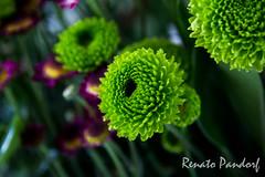 Green Fibo Petals