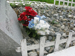 Stephens flowers