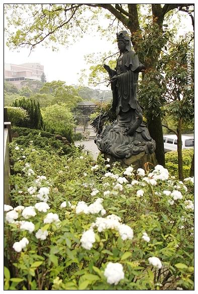 [淡水.旅遊]緣道觀音寺~日本廟宇風格.寧靜之地 @VIVIYU小世界
