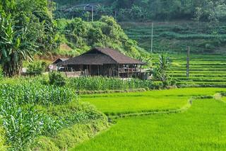bac son - vietnam 14