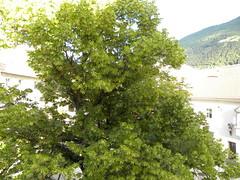 2013 06 VAL VENOSTA 058
