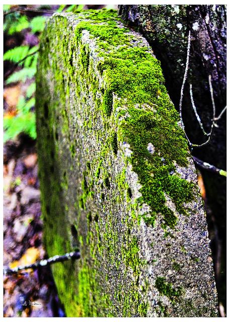 Rolling Stone Gathered Moss