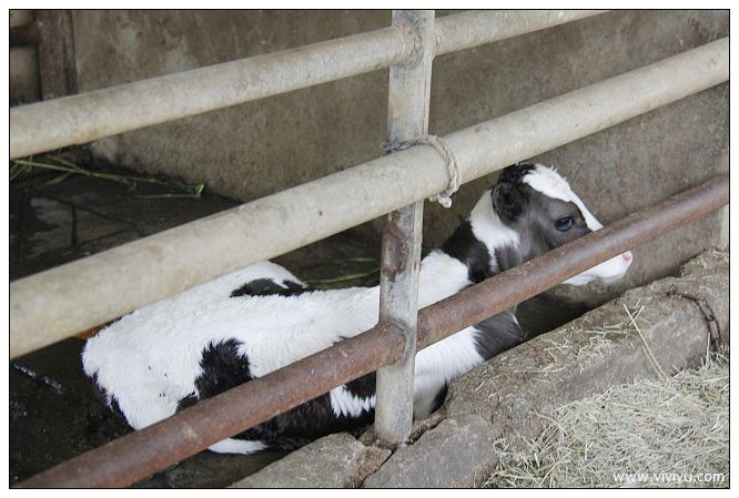 [活動]味全埔心牧場瑞士嘉年華.必玩景點六大.不容錯過 @VIVIYU小世界