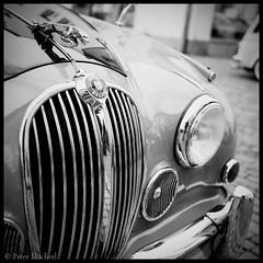 "Jaguar • <a style=""font-size:0.8em;"" href=""http://www.flickr.com/photos/58574596@N06/8727753107/"" target=""_blank"">View on Flickr</a>"