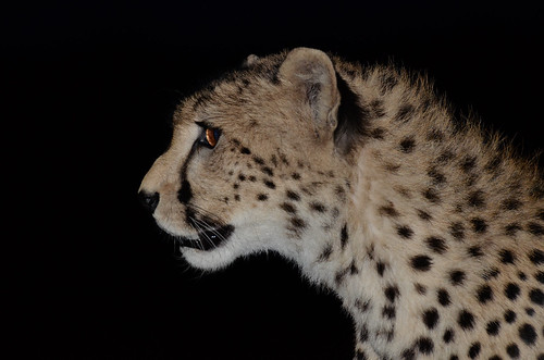 """safari tanzania • <a style=""""font-size:0.8em;"""" href=""""http://www.flickr.com/photos/113706807@N08/11869869284/"""" target=""""_blank"""">View on Flickr</a>"""