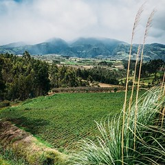 Okay, so those twenty-eight miles I did yesterday weren't exactly with ease, definitely paying today. Still though, Ecuador has great, wide roads which make walking much easier. Should be in Quito in three days. #theworldwalk #travel #ecuador