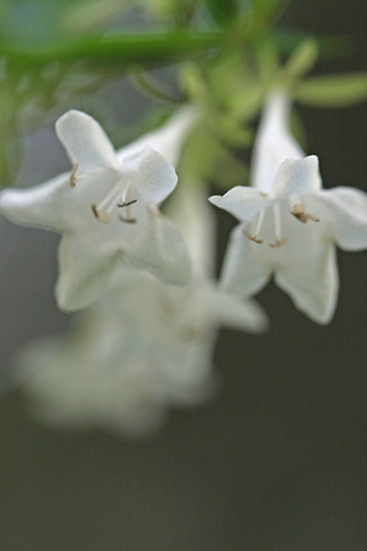 自然環境保全センターの花(Unknown, Nature Environment Preservation Center, Kanagawa, Japan)